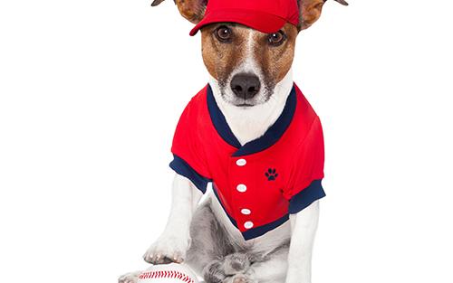 野球帽かぶる犬